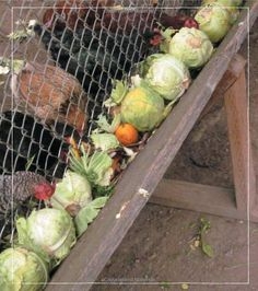 Free-Range Chicken Gardens: How to Create a Beautiful, Chicken-Friendly Yard Backyard Chicken Coop Plans, Raising Backyard Chickens, Keeping Chickens, Backyard Farming, Pet Chickens, Hoop House Chickens, Chicken Coop Pallets, Urban Chickens, Chicken Tractors