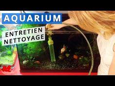 Aquarium maintenance and cleaning Aquariums, Aquarium Terrarium, Rio, Goldfish, Pisces, Tips, World, Everything, Home