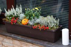 Osázené truhlíky můžete dekorovat různými přízdobami, které dokreslí panující roční období. Fall Planters, Outdoor Planters, Container Plants, Container Gardening, All About Plants, Green Windows, Garden Deco, Flower Pots, Flowers