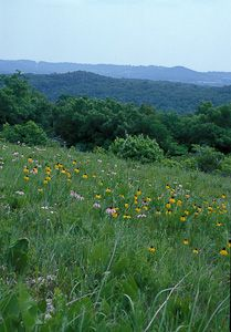 White River Balds Natural Area in Taney County, Mo. | Missouri Department of Conservation