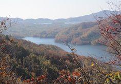 Herfst, Herfst Bladeren, Arboretum, Kleurrijke, Woods
