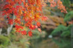 成田山/木々が頬を染める秋
