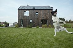 The Dox House / Mjölk architekti - cool house and cool dog