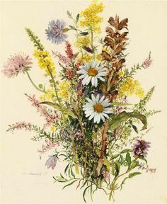 Margarethe Adametz-полевые цветы. Обсуждение на LiveInternet - Российский Сервис Онлайн-Дневников