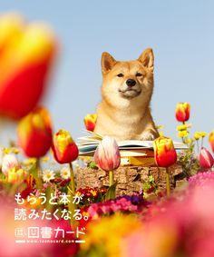 2012 春/図書カード/poster