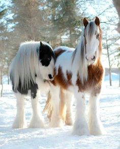 Cute And Beautiful Animals