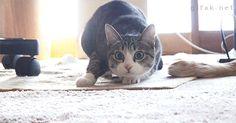 Gato acechando