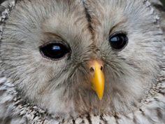 Cute baby owl!