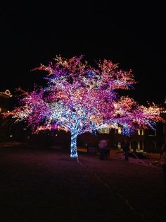Glowing trees in the High Cities.