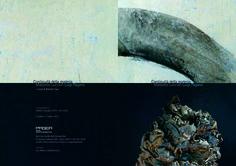 Massimo Luccioli - Luigi Pagano Pagea Arte Contemporanea Angri (SA)