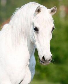 Grey/white horse