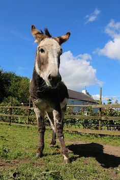 There is a wealth of family friendly activities and things to do in Tipperary in Ireland's Ancient East From castles to bike parks, equine adventures to fun on the water. Stuff To Do, Things To Do, Apple Farm, Artisan Food, Bike Parking, Donkeys, Juices, Pitch, Apples