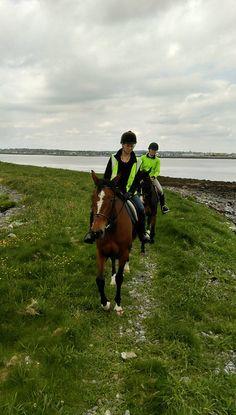 Island Trek in Galway Bay Riding Holiday, Small Island, Horse Riding, Trekking, Equestrian, Vacations, Irish, Traveling, Horses