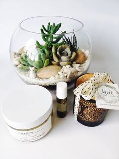 Large Terrarium Gift Pack - Vidabela Flowers and Terrariums Large Terrarium, Auckland, Packing, Table Decorations, Flowers, Gifts, Bag Packaging, Favors, Presents