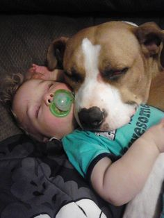 Pitbulls are actually the original nanny dog! This picture is really what Pitbulls actually do!