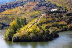 http://piximus.net/media/11266/most-beautiful-vineyards-of-the-world-15.jpg