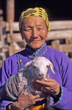 Mongolia,near ulaanbaatar, mongolian grassland in winter, steppes, mongolian woman, 3 day old lamb