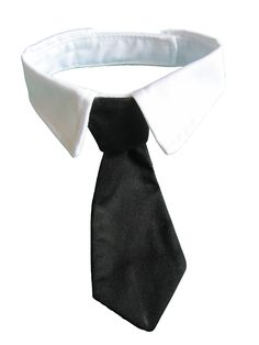 Vedem Pets Dog Cat Formal Neck Tie Tuxedo Bow Tie and Collar Black ** You can find more details by visiting the image link.