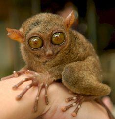 top ten weirdest animals
