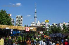 ほうづき市と東京スカイツリー