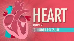 The Heart, part 1 - Under Pressure: A&P #25