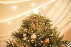 [dress a Christmas tree] 대한민국 No.1 감성채널. 얼라우투(allowto.co.kr)