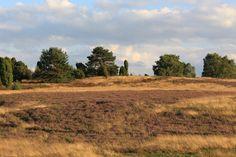 August 2016 - Lüneburger Heide