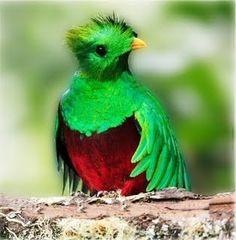 México. Quetzal.