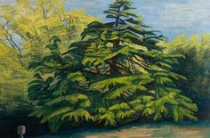 Wilhelmina Barns-Graham - Balmungo Garden – Deodar Tree, c.1981