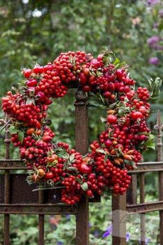 Inspired by Nature - Kranz aus Hagebutten Inspired by Nature - wreath of rosehips Noel Christmas, Christmas Wreaths, Christmas Decorations, Xmas, Holiday Decor, Natural Christmas, Country Christmas, Merry Berry, Corona Floral