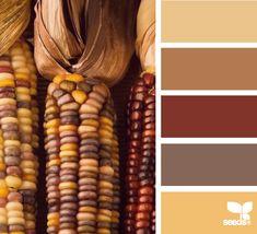 harvested hues