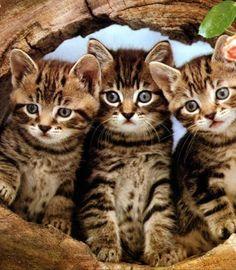 Three times cute…                                                       …