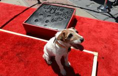 uggie the dog | Uggie the Dog, 'Artist' Canine Star, Dead at 13