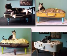 aww. just grab an old suitcase and some table legs, and yay-a DIY bed for cats AND dogs!