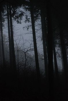 Dark forest. The Haunted Forest in The Ring Chronicles