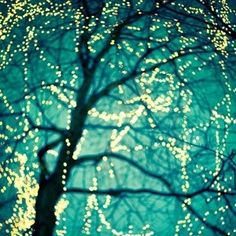 breathtaking...twinkle lights all year round please and thank you!