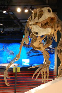 Appalachiosaurus- the dominate predator in Alabama during the Late Cretaceous Period. by McWane Science Center