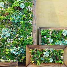 Vertical gardening, inside and out.  Gorgeous succulents