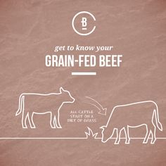 Get to know your beef and learn how the grain-fed process works. Getting To Know You, Knowing You, Grains, Advice, Beef, Learning, Meat, Studying, Teaching