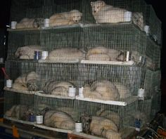 IMAGINE YOUR ENTIRE LIFE SPENT IN THIS CAGE .....for some pathetic souless person's vanity for a fur trimmed coat...imagine watching your cellmates being murdered knowing it will soon be your turn...imagine never seeing a tree or the sun or breathing the air....humans are despicable and God's creation is His beloved....Cages on Fur Farm  #Canada