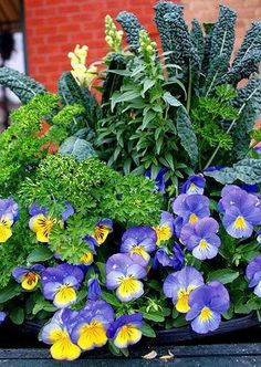 Container Garden jardin potager with kale yellow snapdragons violas parsley Container Flowers, Container Plants, Container Gardening, Fall Containers, Garden Online, Gardening For Beginners, Gardening Tips, Gardening Zones, Organic Gardening