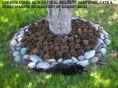 Pinecone mulch