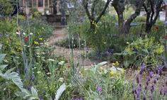 This low maintenance approach was also in evidence in L'Occitane's perfumer's garden designed by James Basson, where plants are placed close together and self-seeding varieties chosen.
