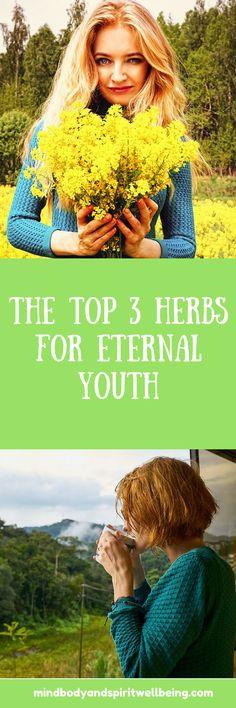 herbs for eternal youth, anti-aging tea, rejuvenation herbs, detox tea, herbal blends, chamomile, immortelle, everlasting, st.john's wort