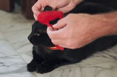How to Crochet a Cat Hat: 12 steps - wikiHow  I made a Pom Pom for the top