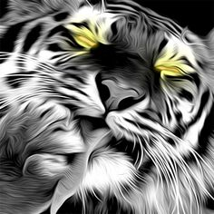 #Tiger #photoshop #illustration