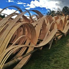 CAM large scale in FOS, fading color? reed w/ bamboo? In Denver. Bamboo sculptures at the Botanic Gardens.