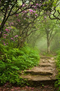 PATHWAYS - ~~Craggy Steps ~ Blooming Catawba Rhododendrons at a foggy Craggy Gardens, Blue Ridge Mountains, North Carolina by Joye Ardyn Durham~~ Beautiful Landscapes, Beautiful Gardens, Magical Gardens, Beautiful Forest, Craggy Gardens, The Secret Garden, Hidden Garden, Secret Gardens, Beautiful Places