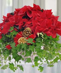For a holiday gift that will be remembered for years to come, consider sending our popular Poinsettia and Ivy Garden Basket, complemented with pine cones. Christmas Flowers, Winter Flowers, Christmas Decorations, Holiday Decor, Christmas Time, Boston Florist, Local Florist, Winter Flower Arrangements, Poinsettia Plant