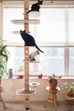 Animal Room, Cat Tree Designs, Cat Wall Shelves, Animal Gato, Diy Cat Tree, Cat Perch, Cat Towers, Cat Stands, Cat Playground